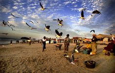 Viaje a Senegal-Casamance  http://www.taranna.com/tag/Senegal+africa/