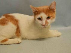 IF YOU FOSTER THE VET BILLS ARE PAID -9/7/16. HAS NECK INJURY!