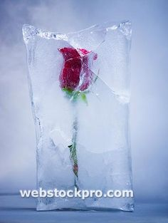 One of the prettiest things I ever saw at a winter wedding. Red rose frozen in a block of ice. It had a light at the bottom which made it glow and it melted slowly throughout the day gradually revealing the rose. So romantic! And could be done with any flowers.
