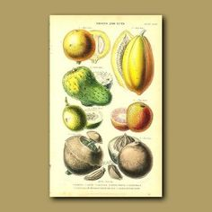 Tropical Fruit: Mammee, Pawpaw, Soursop, Negro Peach, Granadilla, Brazil Nut