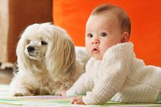 Bringing home a new baby to a household with an existing dog (or dogs) should be done with great care and a good amount of foresight.