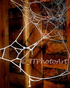 Title: Nature's Lace By: JTPhotoArt   Description: A barn spider's abandoned web is frozen and covered with frost.