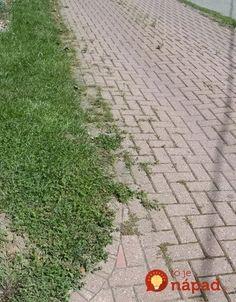 Thing 1, Sidewalk, Side Walkway, Walkway, Walkways, Pavement