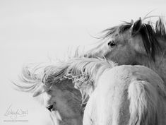 Beautiful Wild Horse Photography