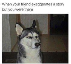Funny Dog Memes – 50 Pics #funnydogquotes #funnydogs