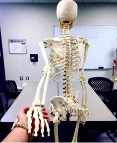 Lets fall in love with medicine♥️ Medical Art, Medical School, Medical Humor, Studying Medicine, Nurse Aesthetic, Medical Wallpaper, Med Student, Student Motivation, Med School
