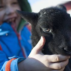 Just can't get over the #synergy between these two #Kids! #farmlife #kidz #hellyhansen #farmkids #spring #babylamb #merino #love #afternoon #lovelight