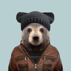 Kodiak Brown Bear - Ursus Arctos Middendorffi
