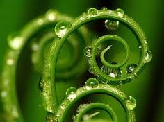 Macro Photography Fern Frond with Water Droplets Pattern Photography, Abstract Photography, Nature Photography, Photography Ideas, Levitation Photography, Experimental Photography, Exposure Photography, Winter Photography, Beach Photography