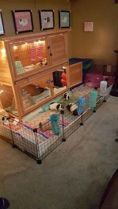 trendy ideas for pet bunny diy cage guinea pigs Diy Guinea Pig Cage, Guinea Pig Hutch, Guinea Pig House, Cages For Guinea Pigs, Diy Guinea Pig Toys, Guinea Pig Costumes, Bunny Hutch, Caring For Guinea Pigs, Guinea Pig Breeding