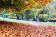 Walking the dog through the autumn leaves