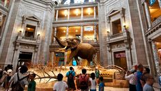 Explore the National Museum of Natural History. Family fun awaits!
