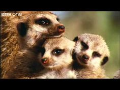 2:00 min - What A Wonderful World With David Attenborough -- BBC One [FULL HD]