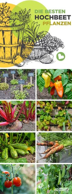 - Die besten Hochbeetpflanzen: Gemüse, Kräuter, Früchte für eine gute Ernte To make the most of the limited space in the raised bed, some vegetables, herbs and fruits are particularly suitable. Here you will find the best plants for the raised bed. Vegetable Garden Design, Garden Soil, Garden Care, Garden Plants, Vegetable Gardening, Organic Gardening, Flower Gardening, Plants For Raised Beds, Raised Garden Beds