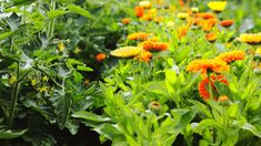 Events › arizona gardening series: crop rotation for vegetable gardens Garden Fencing, Garden Planters, Herb Garden, Vegetable Garden, Garden Art, Garden Party Favors, Arizona Gardening, Crop Rotation, Garden Quotes