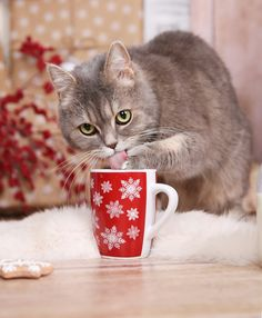 Christmas Gifts for Cat Lovers - Cat Themed Gifts Cat Lover Gifts, Cat Gifts, I Love Cats, Cute Cats, Funny Dogs, Funny Animals, Cat Sneezing, Dog Breed Info, Cat Themed Gifts