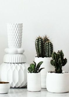 A favorite look: cacti collection