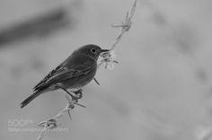 Bird #PatrickBorgenMD