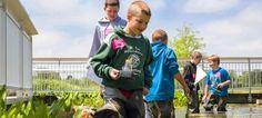 Camp CBG: Ecology Glencoe, Illinois  #Kids #Events