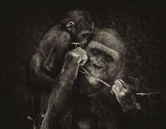 Cozy Photo by Koustav Maity -- National Geographic Your Shot