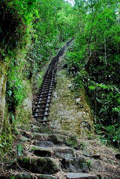 Selva alta peruana. Andes orientales