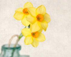 "Fine Art Flower Photography Print """"Yellow Daffodils No. 9"""""