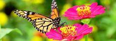 Butterfly Farming Raising Moths Farm Framing Flowers cd Monarch Insect 33 books - All For Garden