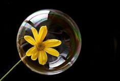 Una pompa de jabón es una porción de aire rodeada por una película de agua y un elemento tensioactivo (jabón o detergente).  En función de las condiciones en las que se forme, la pompa puede adoptar formas diversas: esférica, ovalada, semiesférica, etc