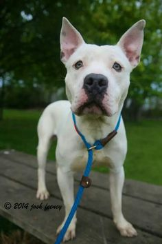 Rio is #adoptable at #CACC adoptable pets on Facebook in #Chicago