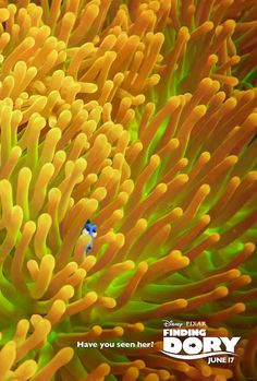 Finding Dory - Anemone Poster