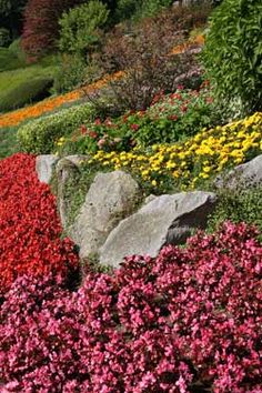 We show you how to plan your rock garden designs, the steps for building a rock garden and list suitable rock garden plants. Rock Garden Design, Rock Garden Plants, Lawn And Garden, Pocket Garden, Drought Resistant Plants, Yard Care, Gardening Tips, Flower Gardening, Just Dream
