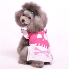 DOGO Girl Skull Tank on a gray Toy Poodle.  dogopet.com