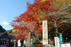 旅行者が選んだ!東京の人気紅葉名所ランキング Top20 | TripAdvisor Gallery