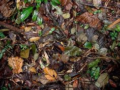 composting is the best way to reduce your garbage residues and fertilize your plants