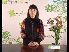 Aprenda Tudo Sobre Astromélias e Como Cuidar   Flores - Cultura Mix