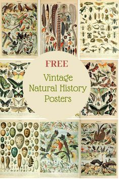 Free Printable Natural History Posters Of Adolphe Millot - Picture Box Blue History Posters, Nature Posters, Paper Art, Paper Crafts, Diy Crafts, Vintage Prints, Vintage Posters, Retro Posters, Vintage Birds