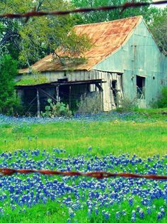 Awesome Old Barn, Great Color. Texas bluebonnets frame the fabulous old barn! Love bluebonnets and love old barns. Farm Barn, Old Farm, Country Barns, Country Life, Country Living, Country Roads, Architecture Unique, Barn Photography, Landscape Photography