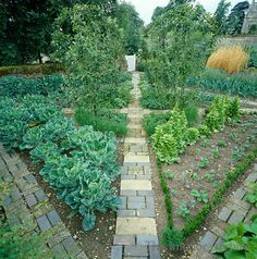 the vegetable garden has been designed as a formal parterre and planted with cabbage lettuce - Fruit Garden Design