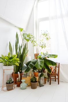 Want to really learn how to care for a fiddle leaf fig? Warning: It's not easy to keep this greenery alive—but it is totally doable. Here, two experts share all their tips and tricks for keeping a fiddle leaf fig thriving in your home. Green Plants, Potted Plants, Plant Pots, Plant Wall, Air Plants, Air Filtering Plants, Plantas Indoor, Rue Verte, Decoration Plante