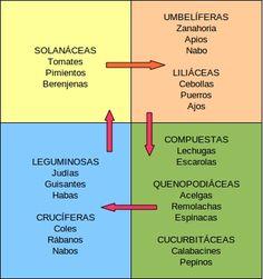 Agrupación de los principales cultivos por familias y ejemplo de rotación para 4 parcelas: