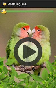 Mastering Bird adalah aplikasi yang berisi suara - suara burung yang bagus untuk isian burung kicauan anda. Dengan aplikasi ini suara burung anda dapat dilatih sehingga burung kesayangan anda memiliki variasi suara yang cukup banyak.  Suara burung yang ada diaplikasi ini dibuat sedemikian rupa baik frekuensi dan jeda loopingnya sehingga akan memudahkan burung kesayangan anda untuk menirukannya.