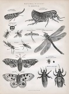 1880 Antique British Engraving of Insects No. 2