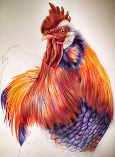 Moving along quickly on my Rooster. I hope you are enjoying the progress. Rooster Painting, Rooster Art, Chicken Painting, Chicken Art, Colored Pencil Portrait, Color Pencil Art, Bird Drawings, Animal Drawings, Watercolor Bird