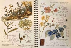 Sign in for The Original Beginning a Nature Journal Garden Journal, Nature Journal, Sketchbook Inspiration, Bullet Journal Inspiration, Arte Sketchbook, Scrapbook Journal, Botanical Art, Botanical Drawings, Book Of Shadows