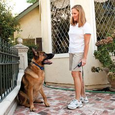 Are you about to train your dog. Then you can go for Best Dog shock training collar for your dog to acquire an intention to modify bad dog behaviour. Dog Training Equipment, Dog Training Tips, Dog Shock Collar, Positive Dog Training, Alpha Dog, The Perfect Dog, Training Collar, Dog Behavior, Dog Care