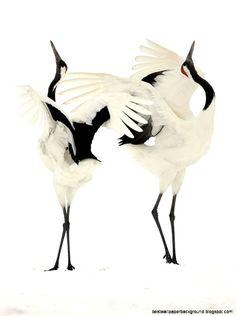 Dancing Japanese Cranes   Hokkaido Japan