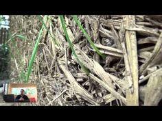 Eco-construction en terre-paille - YouTube