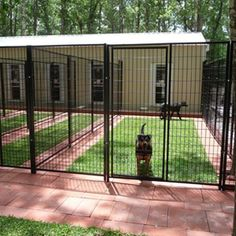Grassed outdoor kennel area, like this... maybe w/ a sand spot in a corner