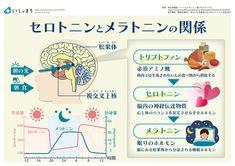 セロトニンとメラトニンの関係 #infographics Health Advice, Health Care, Brain Tricks, Anatomy And Physiology, Human Body, Quotations, Psychology, Infographic, Medicine