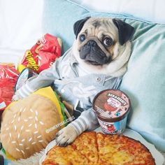 This junk-food-loving pug is all of us. Baby Animals Super Cute, Cute Funny Animals, Funny Cute, Funny Animal Memes, Funny Animal Pictures, Funny Dogs, Cute Dogs And Puppies, Bulldog Puppies, Doggies